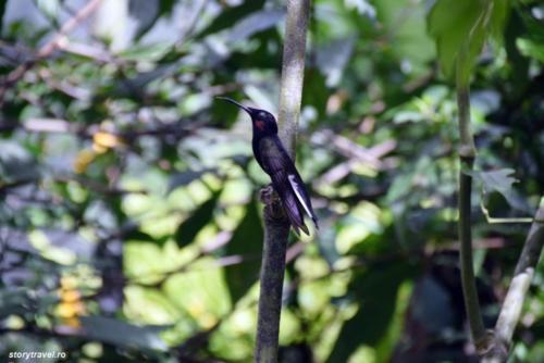 iguazu 116