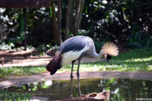 iguazu 100
