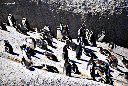 pinguini 12
