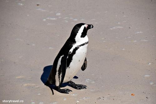 pinguini 13