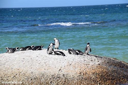pinguini 16