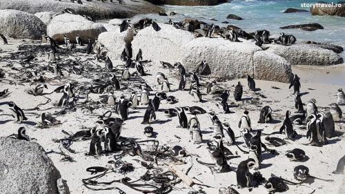 pinguini 4