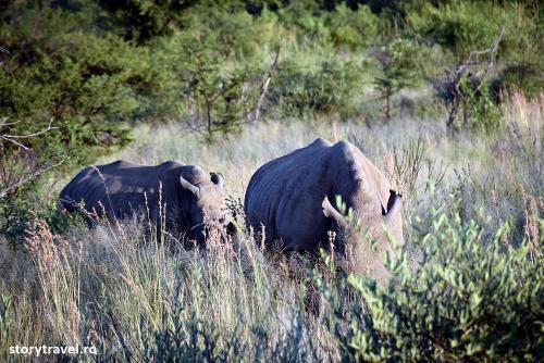 safari 36